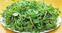 Picture of WATERCRESS