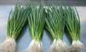 Picture of SCALLION