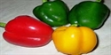 Picture of Capsicum