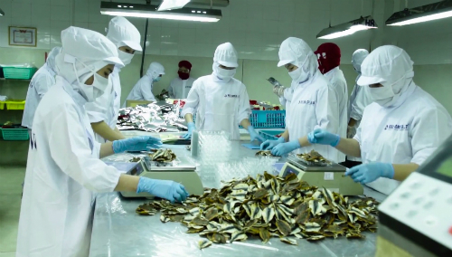 Picture of Phan Thiet specialty dried fish for export in Japan