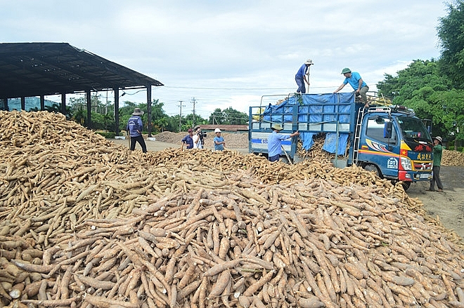 Picture of  Cassava export turnover increased by over 118% in November 2019
