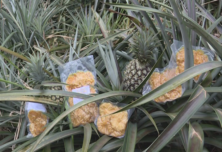 Picture of Cayen pineapple dried plastic, goods are no longer flushed market